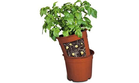 potato patch plant container groupon goods