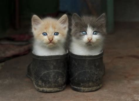 cats shoes new photos bloger