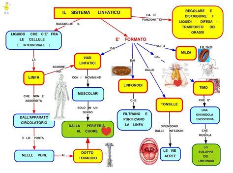 alimenti che purificano il fegato mappa concettuale sistema linfatico