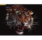Descargar Fondos De Pantalla331 420x315 Tigre Salvaje