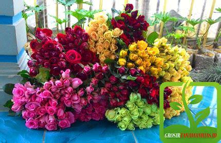 kebun bunga mawar di bandung lembang grosir tanaman hias