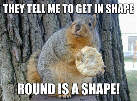 Squirrel Meme - have a laugh squirrel has perfect comeback saboteur365