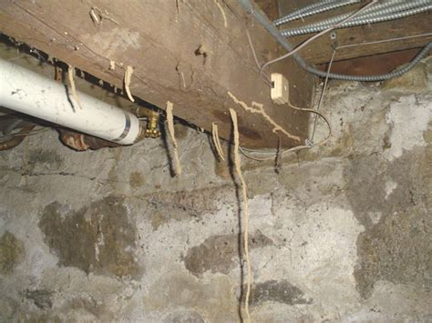 Termite Tunnels Hanging From Ceiling by And Inc Home Inspection Photos By George Neil