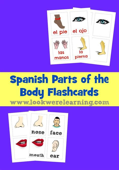 how to say section in spanish the 25 best ideas about spanish flashcards on pinterest