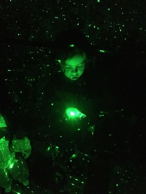 Ring In The Holidays With La Zoo Lights Socal Field Trips Ring In The Holidays With La Zoo Lights Socal Field Trips