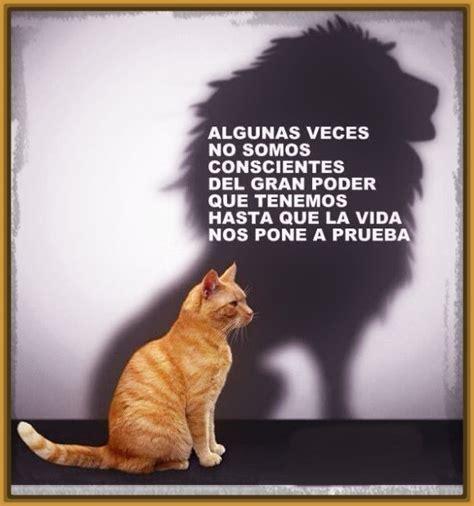 imagenes de leones tiernas imagenes de cachorros bebes hairstylegalleries com