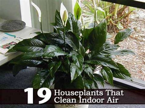 indoor plants to clean air 19 recommended indoor air cleaning houseplants