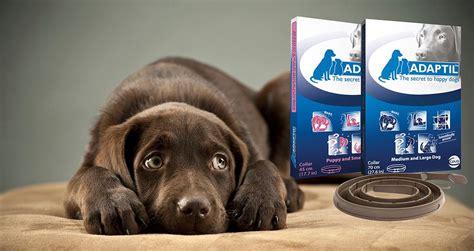dap for dogs adaptil dap appeasing pheromone collar www