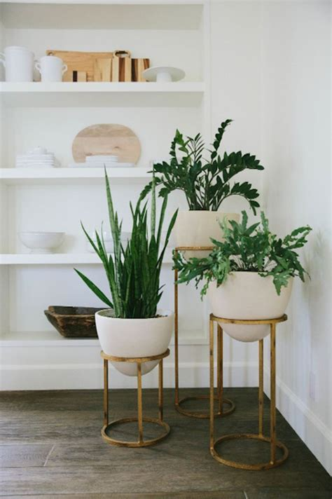 floor plants home decor indoor floor plants myfavoriteheadache com