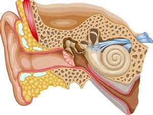 how do we hear maine academy of audiology