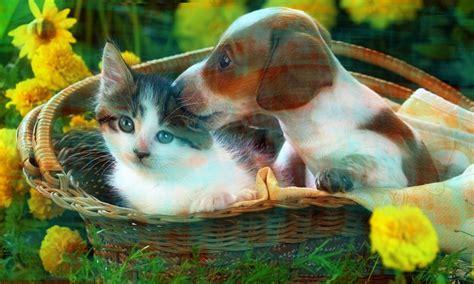 imagenes para perfil para facebook para hombres diferentes im 225 genes para perfil facebook de perros y gatos