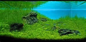 Japanese Aquascape Aquarium Aquatic Scapers Europe International