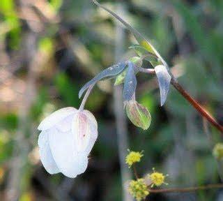 fiori californiani elenco fiori californiani le essenze e f pollicegreen