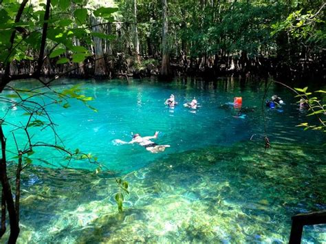 glass bottom boat tours cocoa beach fl 1000 images about florida s springs on pinterest take
