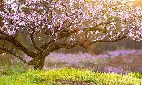 spring starts on different days across u s wsb tv spring shipping starts today arbor day blog