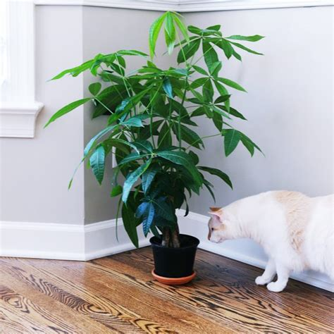 house plants safe for cats bringing nature indoors house plants that are safe for