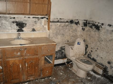 black mold in house how to buy a foreclosure estimate your repair and remodeling costs