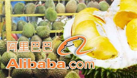 alibaba durian alibaba durian durian top search among chinese consumers