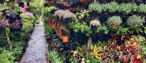 jenis bunga  taman minimalis