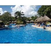 Flamingo Fever  Picture Of Iberostar Tucan Hotel Playa Del Carmen