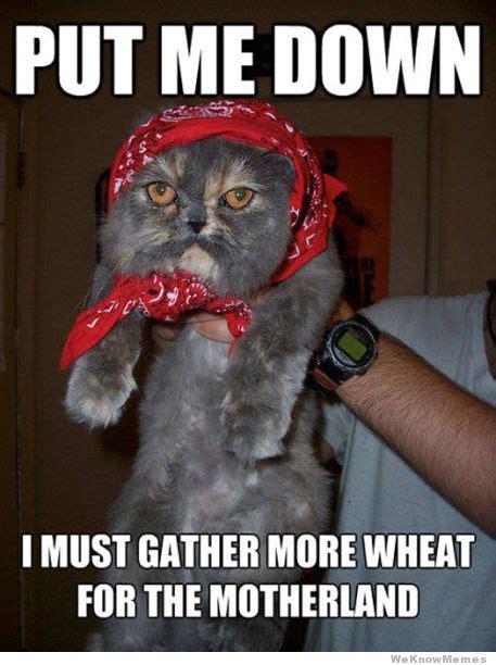 Communist Memes - communist cat meme