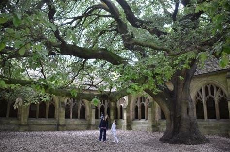 College Trees - the tree picture of new college oxford tripadvisor