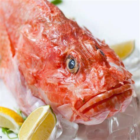 come cucinare scorfano lo scorfano dei mari italiani qualit 224 e sapore fresco pesce