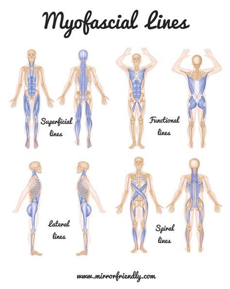 cadenas musculares thomas myers pdf introducing myofascial lines mirror friendly