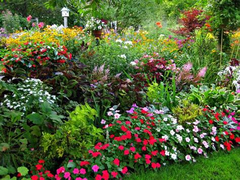 Know Your Plants And Your Garden For Success Urban Summer Flower Garden