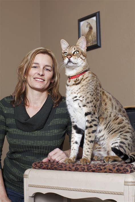 Mews: The amazing cat world records!   Katzenworld