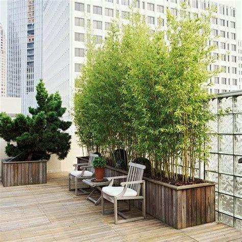 balkon bambus dekor - Bambus Als Sichtschutz Im Kübel