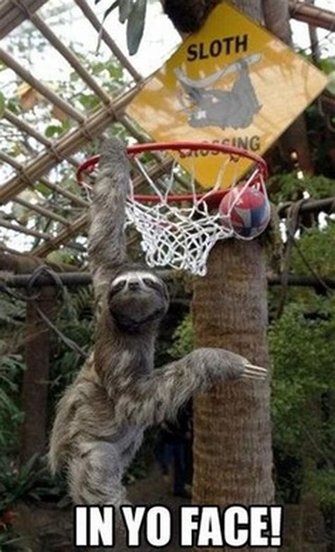 Sloth Asthma Meme - sloth asthma meme 100 images sloth believes he can fly