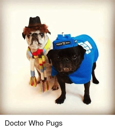 pugs boxing 25 best memes about box box memes