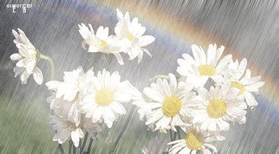 Pemutih Zahwa creative design animasi bunga saat hujan