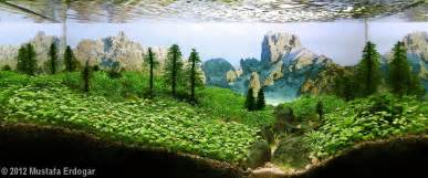 2012 aga aquascaping contest 75