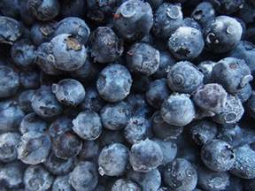 Books On Container Gardening - how to freeze blueberries guide to freezing blueberries