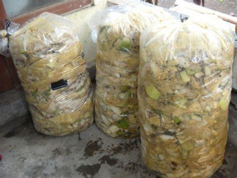 Pakan Ternak Hasil Fermentasi membuat pakan fermentasi ternak kambing satu jam