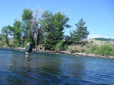 fishing the gallatin river montana fly fishing the gallatin river montana fishing report
