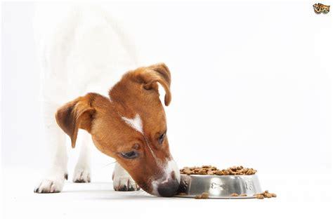 dog  food aggressive petshomes