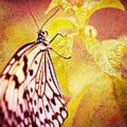 butterfly photograph  jerri moon