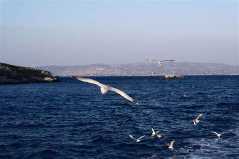 ferry boat agia marina nea styra itin 233 raires des bateaux de agia marina marathon pour nea