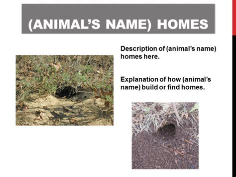 animal homes powerpoint activity k 5 computer lab