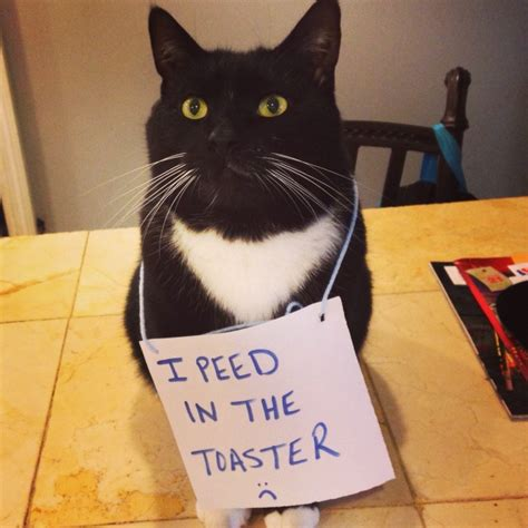 Cat Peed On by Shame Your Pet Shaming Cat Shaming Shame Your