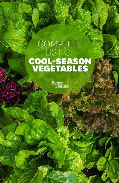 61 best veggie garden images on pinterest gardening