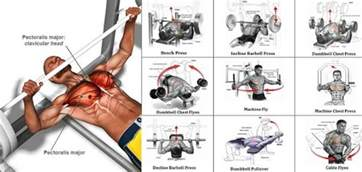 bench press does not build a bigger chest a sle chest workout routine all bodybuilding com