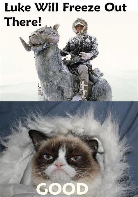 Grumpy Cat Wedding Meme - grumpy cat luke tauntaun star wars the like
