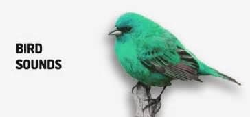 bird sounds free mp3 download orange free sounds