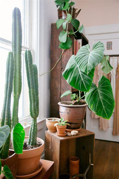 modern houseplants modern indoor house plants modern house