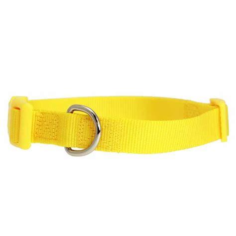 yellow collars collar by zack zoey yellow baxterboo