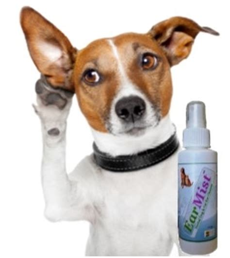 how to clean puppy ears ear infections how to clean your s ears safely